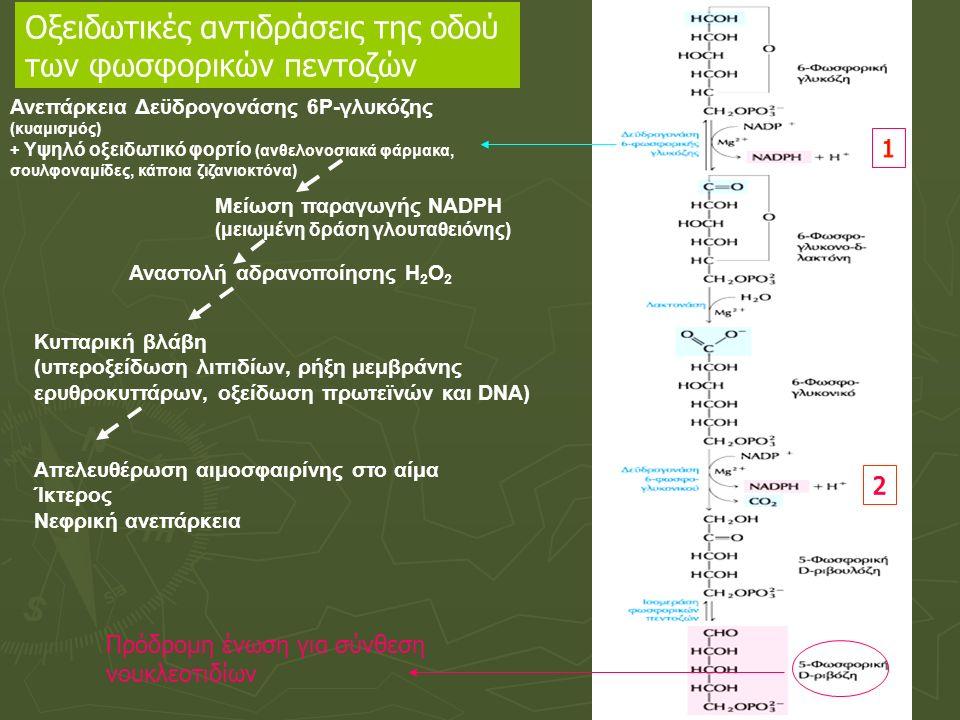 Ανεπάρκεια της δεϋδρογονάσης της 6-φωσφορικης γλυκόζης  Κληρονομική ασθένεια, που χαρακτηρίζεται από αιμολυτική αναιμία  Αδυναμία διατήρηση του ανηγμένου γλουταθείου  Αδυναμία αποτοξίνωσης των οξειδωτικών παραγόντων (προκαλούν χημική βλάβη στο DNA, στις πρωτεΐνες και τα ακόρεστα λιπίδια)  Συνήθως υποκλινική, η αιμολυτική αναιμία εκδηλώνεται μετά τη χορήγηση οξειδωτικών φαρμάκων (αντιβιοτικά, ανθελονοσιακά, αντιπυρετικά), κατανάλωση κουκιών, ή λοίμωξη (φλεγμονώδης απάντηση στη λοίμωξη  δημιουργία υπεροξειδίου στα μακροφάγα) Σωμάτια Heinz: Μάζες αποδιεταγμένων πρωτεϊνών (προσκολλημένες στην κυτταρική μεμβράνη) Αιμολυτική αναιμία σε άτομο με ανεπάρκεια G6PD