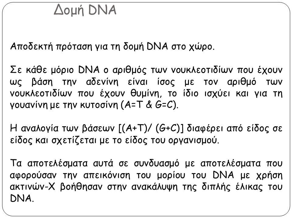 Δομή DNA Αποδεκτή πρόταση για τη δομή DNA στο χώρο. Σε κάθε μόριο DNA ο αριθμός των νουκλεοτιδίων που έχουν ως βάση την αδενίνη είναι ίσος με τον αριθ