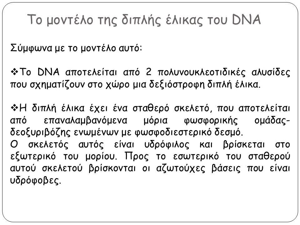 Το μοντέλο της διπλής έλικας του DNA Σύμφωνα με το μοντέλο αυτό:  Το DNA αποτελείται από 2 πολυνουκλεοτιδικές αλυσίδες που σχηματίζουν στο χώρο μια δ