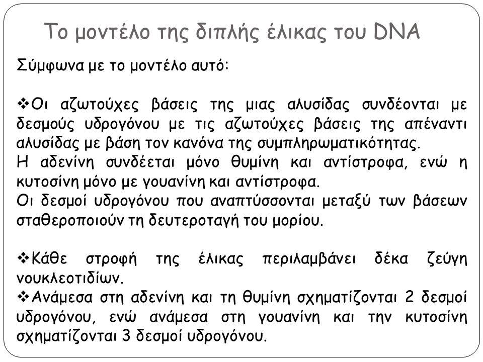 Το μοντέλο της διπλής έλικας του DNA Σύμφωνα με το μοντέλο αυτό:  Οι αζωτούχες βάσεις της μιας αλυσίδας συνδέονται με δεσμούς υδρογόνου με τις αζωτού
