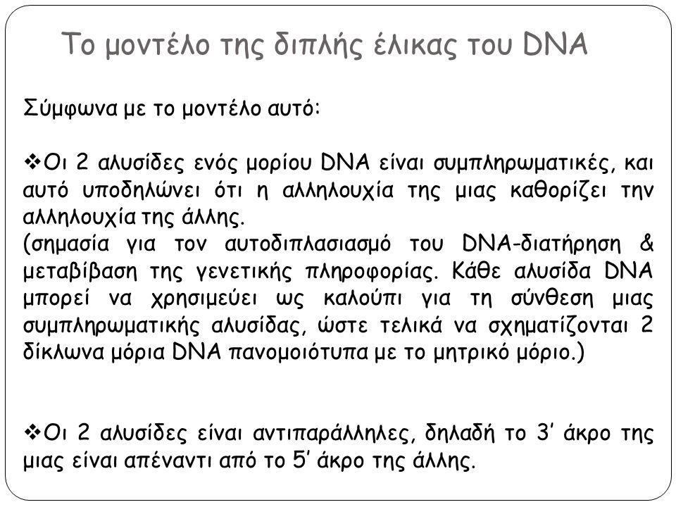 Το μοντέλο της διπλής έλικας του DNA Σύμφωνα με το μοντέλο αυτό:  Οι 2 αλυσίδες ενός μορίου DNA είναι συμπληρωματικές, και αυτό υποδηλώνει ότι η αλλη