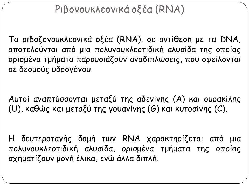 Ριβονουκλεονικά οξέα (RNA) Tα ριβοζονουκλεονικά οξέα (RNA), σε αντίθεση με τα DNΑ, αποτελούνται από μια πολυνουκλεοτιδική αλυσίδα της οποίας ορισμένα