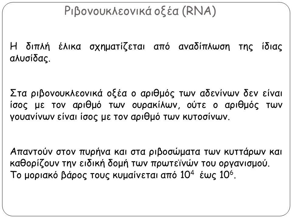Ριβονουκλεονικά οξέα (RNA) Η διπλή έλικα σχηματίζεται από αναδίπλωση της ίδιας αλυσίδας. Στα ριβονουκλεονικά οξέα ο αριθμός των αδενίνων δεν είναι ίσο