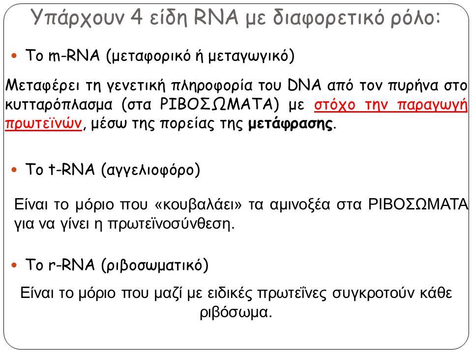 Υπάρχουν 4 είδη RNA με διαφορετικό ρόλο: Το m-RNA (μεταφορικό ή μεταγωγικό) To t-RNA (αγγελιοφόρο) To r-RNA (ριβοσωματικό) Μεταφέρει τη γενετική πληρο