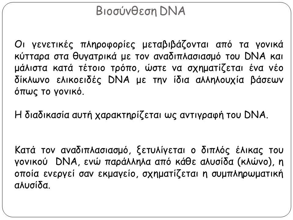 Βιοσύνθεση DNA Οι γενετικές πληροφορίες μεταβιβάζονται από τα γονικά κύτταρα στα θυγατρικά με τον αναδιπλασιασμό του DNA και μάλιστα κατά τέτοιο τρόπο