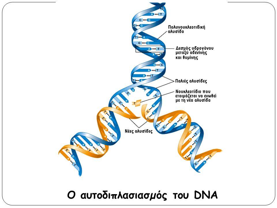 Ο αυτοδιπλασιασµός του DNA