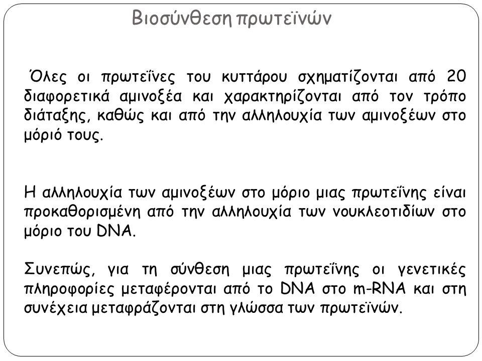 Βιοσύνθεση πρωτεϊνών Όλες οι πρωτεΐνες του κυττάρου σχηματίζονται από 20 διαφορετικά αμινοξέα και χαρακτηρίζονται από τον τρόπο διάταξης, καθώς και απ