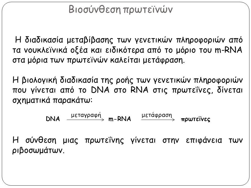 Βιοσύνθεση πρωτεϊνών Η διαδικασία μεταβίβασης των γενετικών πληροφοριών από τα νουκλεϊνικά οξέα και ειδικότερα από το μόριο του m-RNA στα μόρια των πρ