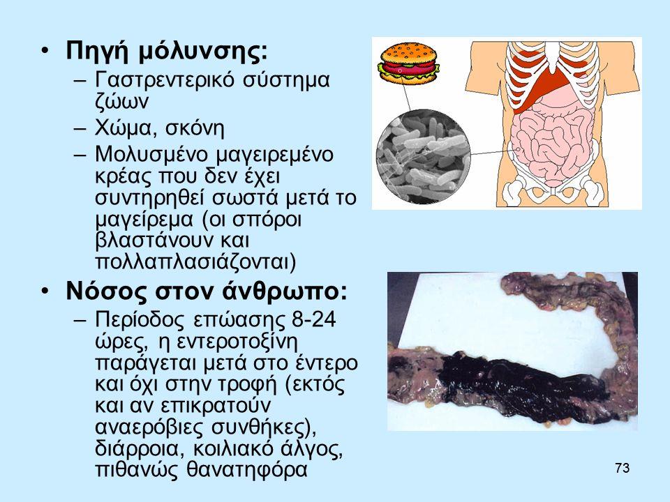 73 Πηγή μόλυνσης: –Γαστρεντερικό σύστημα ζώων –Χώμα, σκόνη –Μολυσμένο μαγειρεμένο κρέας που δεν έχει συντηρηθεί σωστά μετά το μαγείρεμα (οι σπόροι βλαστάνουν και πολλαπλασιάζονται) Νόσος στον άνθρωπο: –Περίοδος επώασης 8-24 ώρες, η εντεροτοξίνη παράγεται μετά στο έντερο και όχι στην τροφή (εκτός και αν επικρατούν αναερόβιες συνθήκες), διάρροια, κοιλιακό άλγος, πιθανώς θανατηφόρα 73