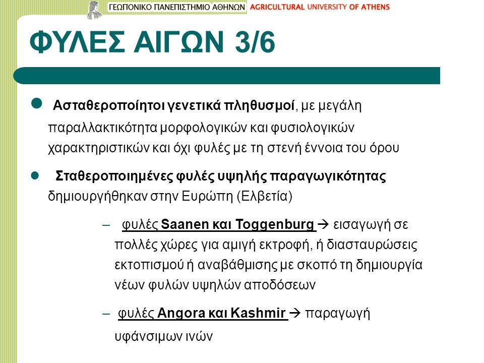 ΦΥΛΕΣ ΑΙΓΩΝ 3/6 Ασταθεροποίητοι γενετικά πληθυσμοί, με μεγάλη παραλλακτικότητα μορφολογικών και φυσιολογικών χαρακτηριστικών και όχι φυλές με τη στενή έννοια του όρου Σταθεροποιημένες φυλές υψηλής παραγωγικότητας δημιουργήθηκαν στην Ευρώπη (Ελβετία) – φυλές Saanen και Toggenburg  εισαγωγή σε πολλές χώρες για αμιγή εκτροφή, ή διασταυρώσεις εκτοπισμού ή αναβάθμισης με σκοπό τη δημιουργία νέων φυλών υψηλών αποδόσεων – φυλές Angora και Kashmir  παραγωγή υφάνσιμων ινών