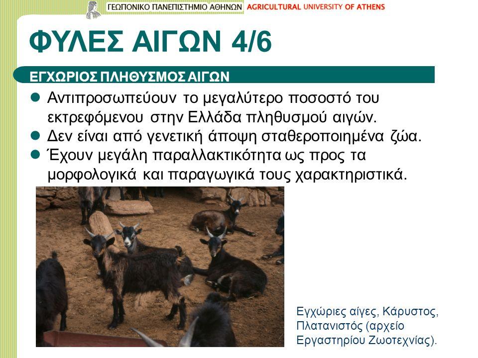 ΦΥΛΕΣ ΑΙΓΩΝ 4/6 Αντιπροσωπεύουν το μεγαλύτερο ποσοστό του εκτρεφόμενου στην Ελλάδα πληθυσμού αιγών.