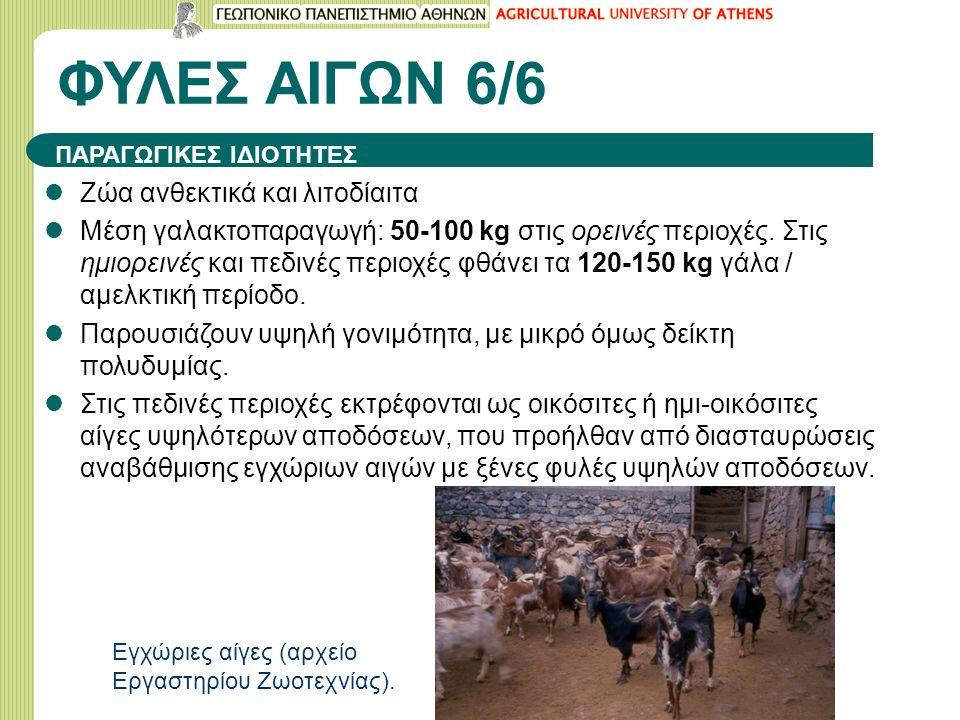 ΦΥΛΕΣ ΑΙΓΩΝ 6/6 Ζώα ανθεκτικά και λιτοδίαιτα Μέση γαλακτοπαραγωγή: 50-100 kg στις ορεινές περιοχές.