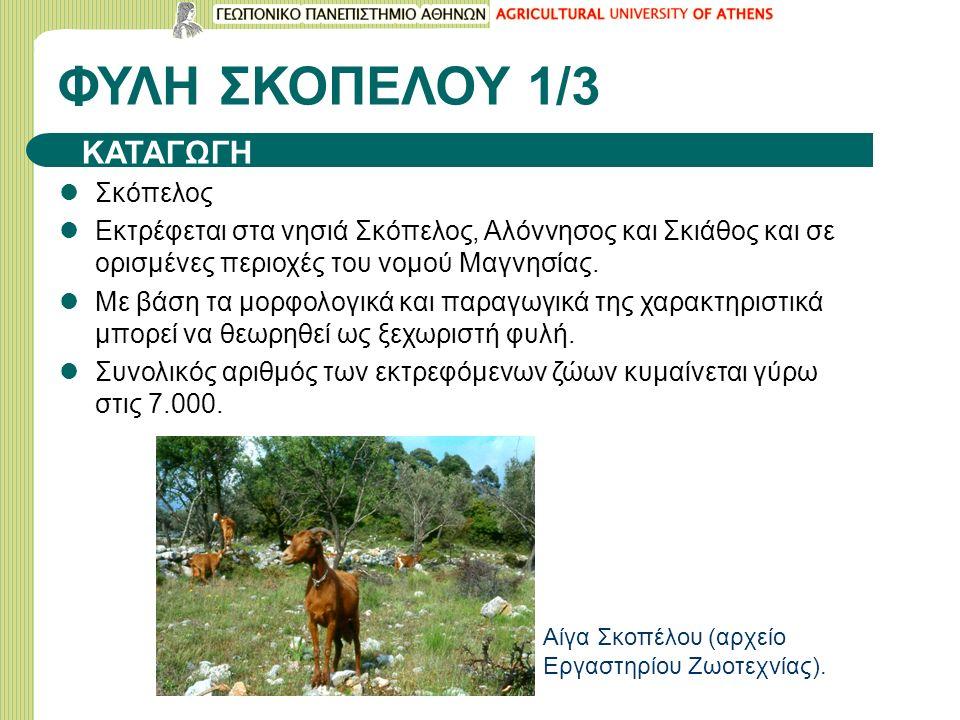 ΦΥΛΗ ΣΚΟΠΕΛΟΥ 1/3 Σκόπελος Εκτρέφεται στα νησιά Σκόπελος, Αλόννησος και Σκιάθος και σε ορισμένες περιοχές του νομού Μαγνησίας.