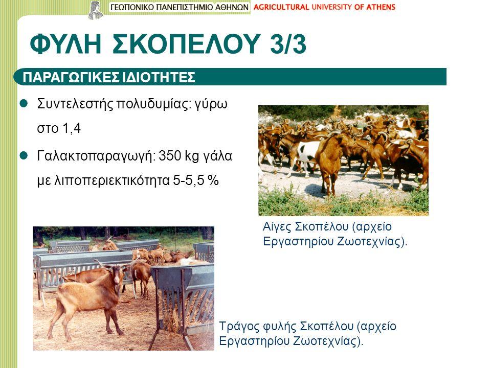 ΦΥΛΗ ΣΚΟΠΕΛΟΥ 3/3 Συντελεστής πολυδυμίας: γύρω στο 1,4 Γαλακτοπαραγωγή: 350 kg γάλα με λιποπεριεκτικότητα 5-5,5 % Αίγες Σκοπέλου (αρχείο Εργαστηρίου Ζωοτεχνίας).