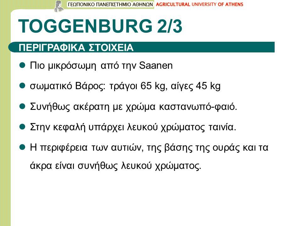TOGGENBURG 2/3 Πιο μικρόσωμη από την Saanen σωματικό Βάρος: τράγοι 65 kg, αίγες 45 kg Συνήθως ακέρατη με χρώμα καστανωπό-φαιό.