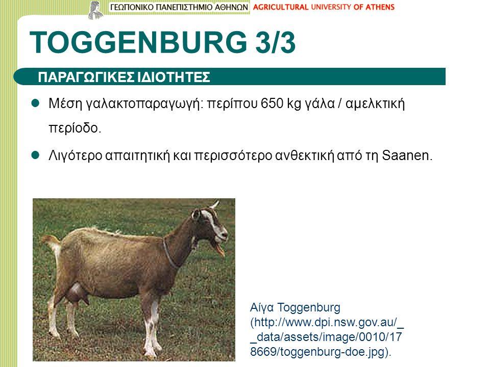 TOGGENBURG 3/3 Μέση γαλακτοπαραγωγή: περίπου 650 kg γάλα / αμελκτική περίοδο.