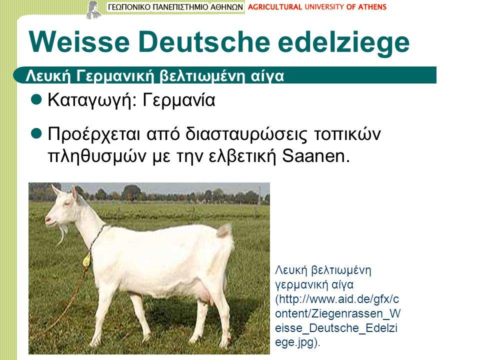 Weisse Deutsche edelziege Kαταγωγή: Γερμανία Προέρχεται από διασταυρώσεις τοπικών πληθυσμών με την ελβετική Saanen.