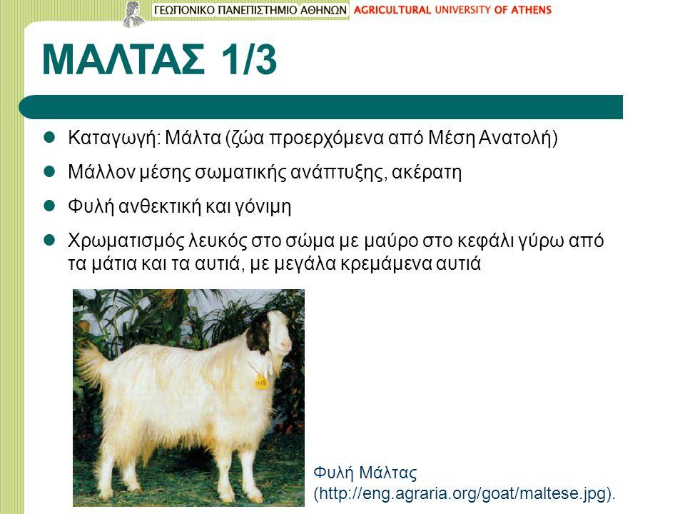 ΜΑΛΤΑΣ 1/3 Καταγωγή: Μάλτα (ζώα προερχόμενα από Μέση Ανατολή) Μάλλον μέσης σωματικής ανάπτυξης, ακέρατη Φυλή ανθεκτική και γόνιμη Χρωματισμός λευκός στο σώμα με μαύρο στο κεφάλι γύρω από τα μάτια και τα αυτιά, με μεγάλα κρεμάμενα αυτιά Φυλή Μάλτας (http://eng.agraria.org/goat/maltese.jpg).
