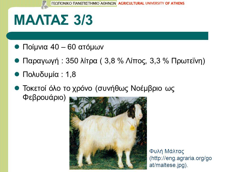 ΜΑΛΤΑΣ 3/3 Ποίμνια 40 – 60 ατόμων Παραγωγή : 350 λίτρα ( 3,8 % Λίπος, 3,3 % Πρωτεϊνη) Πολυδυμία : 1,8 Τοκετοί όλο το χρόνο (συνήθως Νοέμβριο ως Φεβρουάριο) Φυλή Μάλτας (http://eng.agraria.org/go at/maltese.jpg).