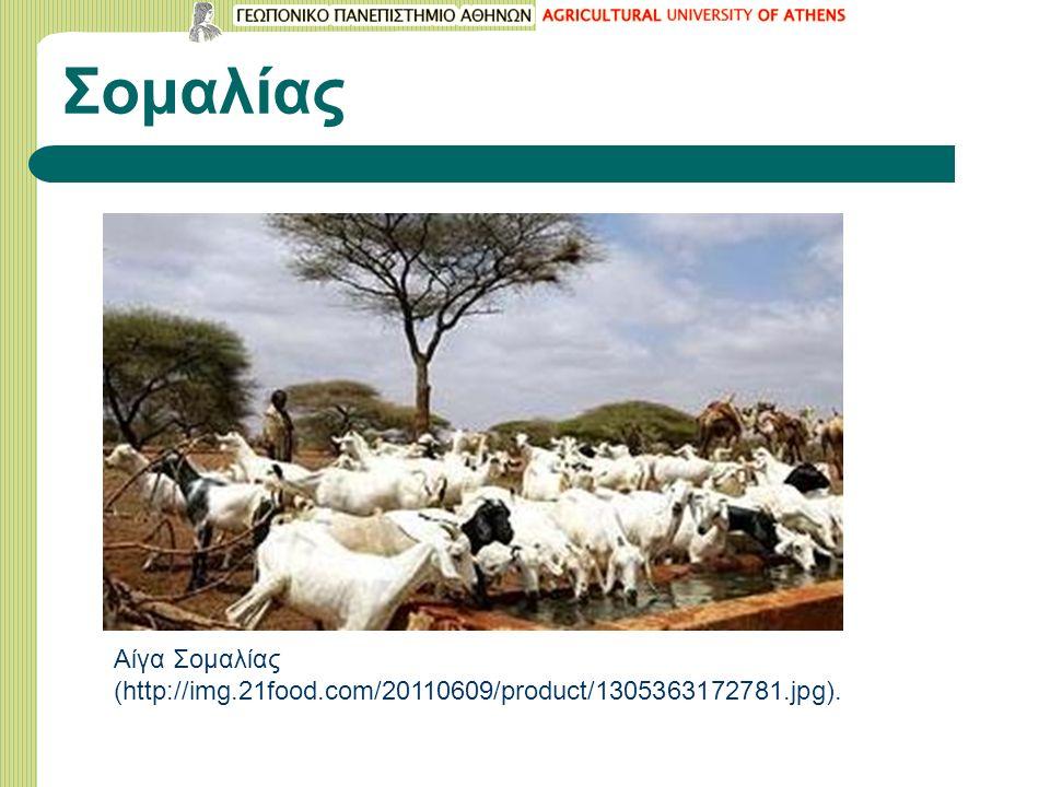 Σομαλίας Αίγα Σομαλίας (http://img.21food.com/20110609/product/1305363172781.jpg).