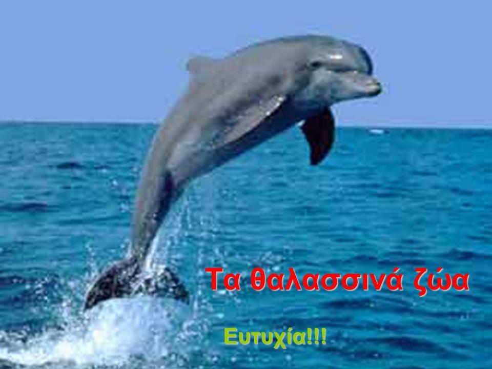 Τα θαλασσινά ζώα Ευτυχία!!!