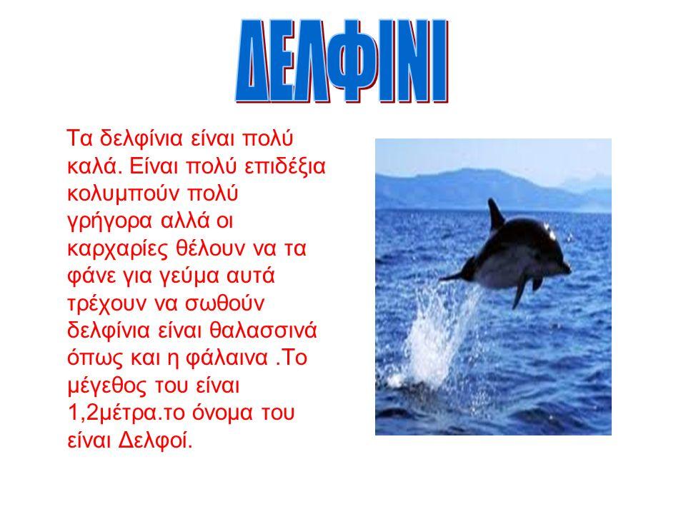 Τα δελφίνια είναι πολύ καλά.
