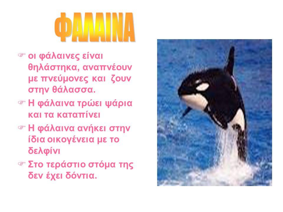  οι φάλαινες είναι θηλάστηκα, αναπνέουν με πνεύμονες και ζουν στην θάλασσα.