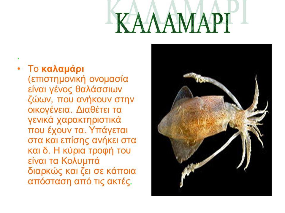 Το καλαμάρι (επιστημονική ονομασία είναι γένος θαλάσσιων ζώων, που ανήκουν στην οικογένεια.