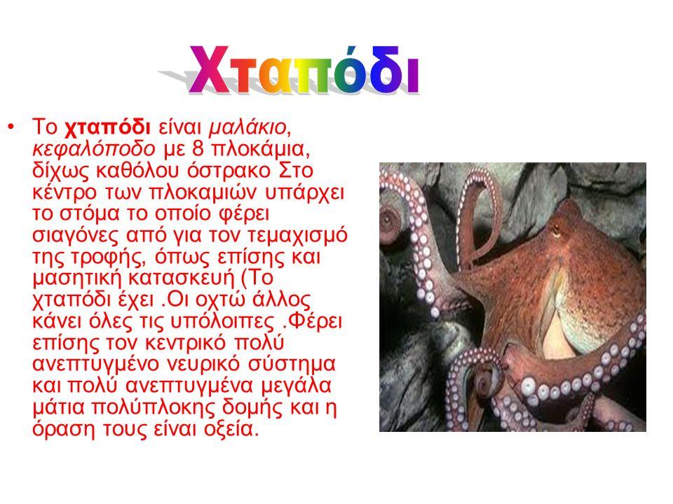 Οι αχινοί, ή αχινιοί, (καθαρεύουσα εχίνοι), είναι μικρά, θαλάσσια ζώα με ασβεστολιθικό σφαιρικό κέλυφος που φέρουν αγκάθια.