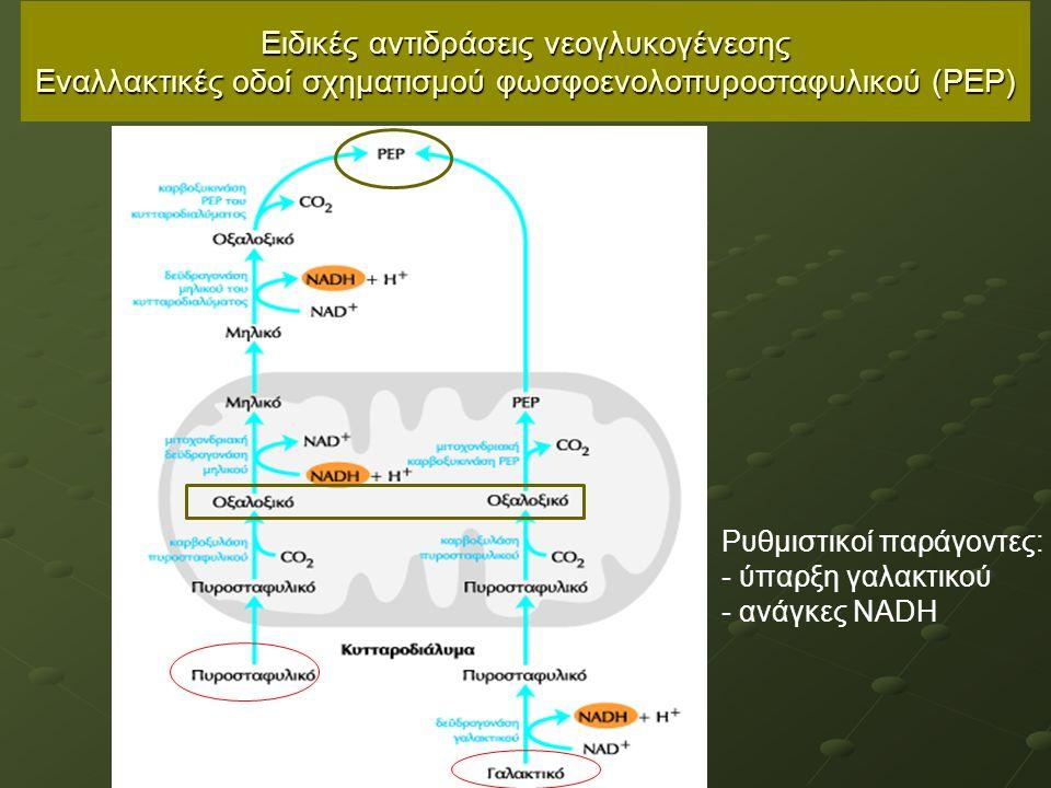 Ειδικές αντιδράσεις νεογλυκογένεσης Εναλλακτικές οδοί σχηματισμού φωσφοενολοπυροσταφυλικού (ΡΕΡ) Ρυθμιστικοί παράγοντες: - ύπαρξη γαλακτικού - ανάγκες ΝΑDΗ