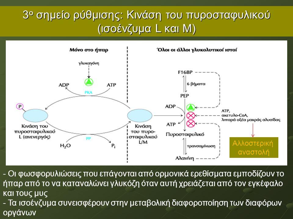3 ο σημείο ρύθμισης: Κινάση του πυροσταφυλικού (ισοένζυμα L και Μ) - Οι φωσφορυλιώσεις που επάγονται από ορμονικά ερεθίσματα εμποδίζουν το ήπαρ από το να καταναλώνει γλυκόζη όταν αυτή χρειάζεται από τον εγκέφαλο και τους μυς - Τα ισοένζυμα συνεισφέρουν στην μεταβολική διαφοροποίηση των διαφόρων οργάνων Αλλοστερική αναστολή