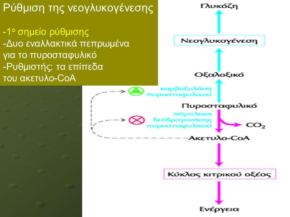 Ρύθμιση της νεογλυκογένεσης -1 ο σημείο ρύθμισης -Δυο εναλλακτικά πεπρωμένα για το πυροσταφυλικό -Ρυθμιστής: τα επίπεδα του ακετυλο-CoA