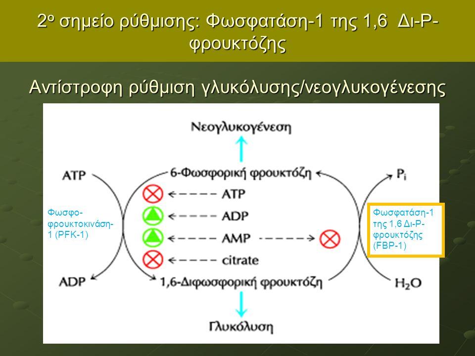 2 ο σημείο ρύθμισης: Φωσφατάση-1 της 1,6 Δι-Ρ- φρουκτόζης Αντίστροφη ρύθμιση γλυκόλυσης/νεογλυκογένεσης Φωσφο- φρουκτοκινάση- 1 (PFK-1) Φωσφατάση-1 της 1,6 Δι-Ρ- φρουκτόζης (FBP-1)