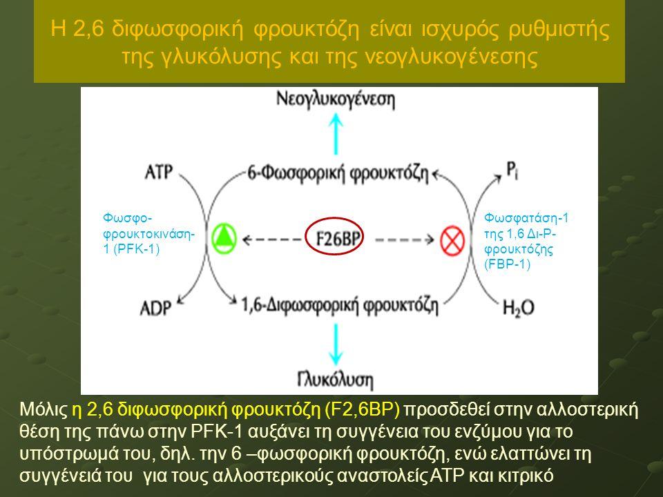 Η 2,6 διφωσφορική φρουκτόζη είναι ισχυρός ρυθμιστής της γλυκόλυσης και της νεογλυκογένεσης Μόλις η 2,6 διφωσφορική φρουκτόζη (F2,6BP) προσδεθεί στην αλλοστερική θέση της πάνω στην PFK-1 αυξάνει τη συγγένεια του ενζύμου για το υπόστρωμά του, δηλ.