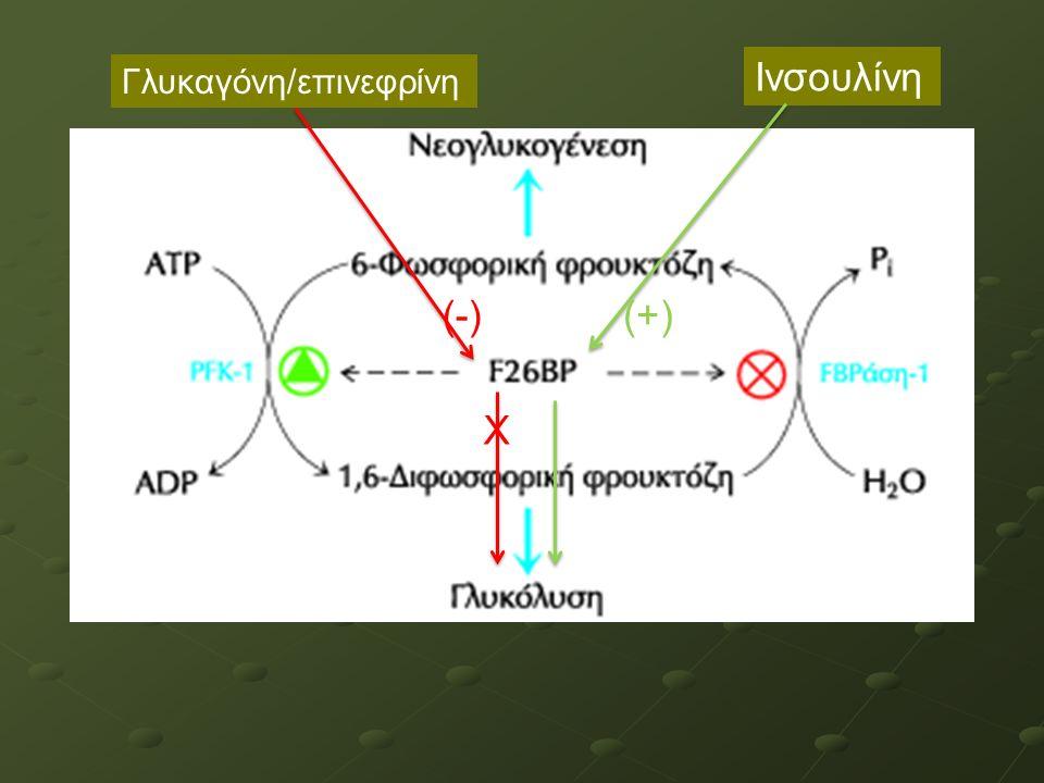 Γλυκαγόνη/επινεφρίνη Ινσουλίνη (-) Χ (+)