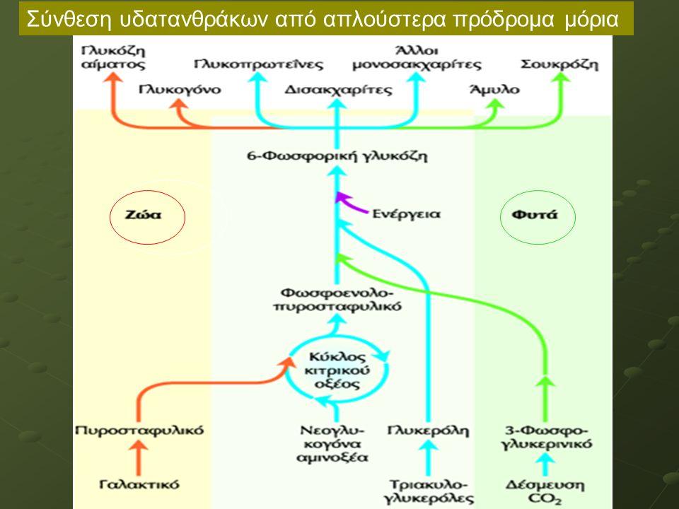 Ρύθμιση των επιπέδων 2,6-δι-Ρ- φρουκτόζης από ινσουλίνη/γλυκαγόνη Όταν ελαττωθεί η γλυκόζη στο αίμα, η γλυκαγόνη δίνει σήμα στο ήπαρ να παράγει περισσότερη γλυκόζη: - Η γλυκαγόνη ελαττώνει τα επίπεδα της 2,6-δι-Ρ- φρουκτόζης, αναστέλλοντας τη γλυκόλυση και διεγείροντας τη νεογλυκογένεση Η ινσουλίνη έχει το αντίθετο αποτέλεσμα: - Η ινσουλίνη αυξάνει τα επίπεδα της 2,6-δι-Ρ-φρουκτόζης, διεγείροντας τη γλυκόλυση και αναστέλλοντας τη νεογλυκογένεση