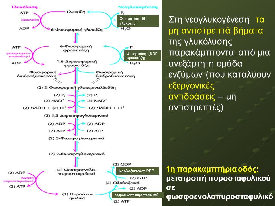 Στη νεογλυκογένεση τα μη αντιστρεπτά βήματα της γλυκόλυσης παρακάμπτονται από μια ανεξάρτητη ομάδα ενζύμων (που καταλύουν εξεργονικές αντιδράσεις – μη αντιστρεπτές) Φωσφατάση 6Ρ- γλυκόζης Φωσφατάση 1,6 DP φρουκτόζης Καρβοξυκινάση ΡΕΡ Καρβοξυλάση πυροσταφυλικού 1η παρακαμπτήρια οδός: μετατροπή πυροσταφυλικού σε φωσφοενολοπυροσταφυλικό
