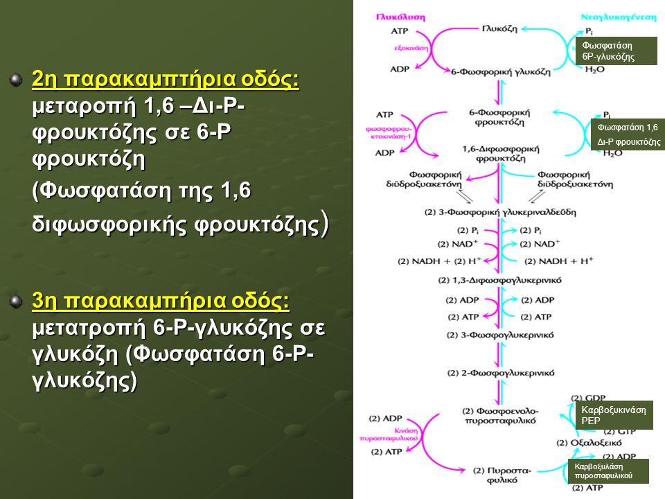 2η παρακαμπτήρια οδός: μεταροπή 1,6 –Δι-Ρ- φρουκτόζης σε 6-Ρ φρουκτόζη (Φωσφατάση της 1,6 διφωσφορικής φρουκτόζης ) 3η παρακαμπήρια οδός: μετατροπή 6-Ρ-γλυκόζης σε γλυκόζη (Φωσφατάση 6-Ρ- γλυκόζης) Φωσφατάση 6Ρ-γλυκόζης Φωσφατάση 1,6 Δι-P φρουκτόζης Καρβοξυκινάση ΡΕΡ Καρβοξυλάση πυροσταφυλικού