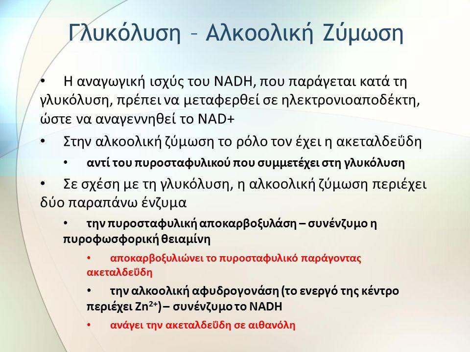 Η αναγωγική ισχύς του NADH, που παράγεται κατά τη γλυκόλυση, πρέπει να μεταφερθεί σε ηλεκτρονιοαποδέκτη, ώστε να αναγεννηθεί το NAD+ Στην αλκοολική ζύμωση το ρόλο τον έχει η ακεταλδεΰδη αντί του πυροσταφυλικού που συμμετέχει στη γλυκόλυση Σε σχέση με τη γλυκόλυση, η αλκοολική ζύμωση περιέχει δύο παραπάνω ένζυμα την πυροσταφυλική αποκαρβοξυλάση – συνένζυμο η πυροφωσφορική θειαμίνη αποκαρβοξυλιώνει το πυροσταφυλικό παράγοντας ακεταλδεΰδη την αλκοολική αφυδρογονάση (το ενεργό της κέντρο περιέχει Zn 2+ ) – συνένζυμο το NADH ανάγει την ακεταλδεΰδη σε αιθανόλη Γλυκόλυση – Αλκοολική Ζύμωση