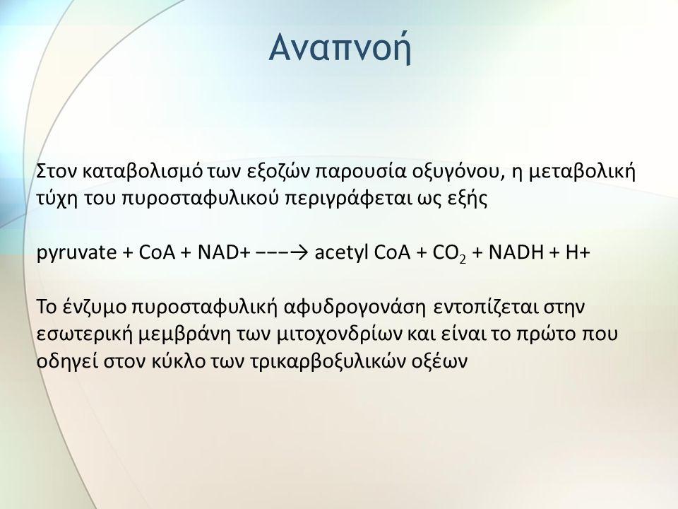Στον καταβολισμό των εξοζών παρουσία οξυγόνου, η μεταβολική τύχη του πυροσταφυλικού περιγράφεται ως εξής pyruvate + CoA + NAD+ −−−→ acetyl CoA + CO 2 + NADH + H+ Το ένζυμο πυροσταφυλική αφυδρογονάση εντοπίζεται στην εσωτερική μεμβράνη των μιτοχονδρίων και είναι το πρώτο που οδηγεί στον κύκλο των τρικαρβοξυλικών οξέων Αναπνοή