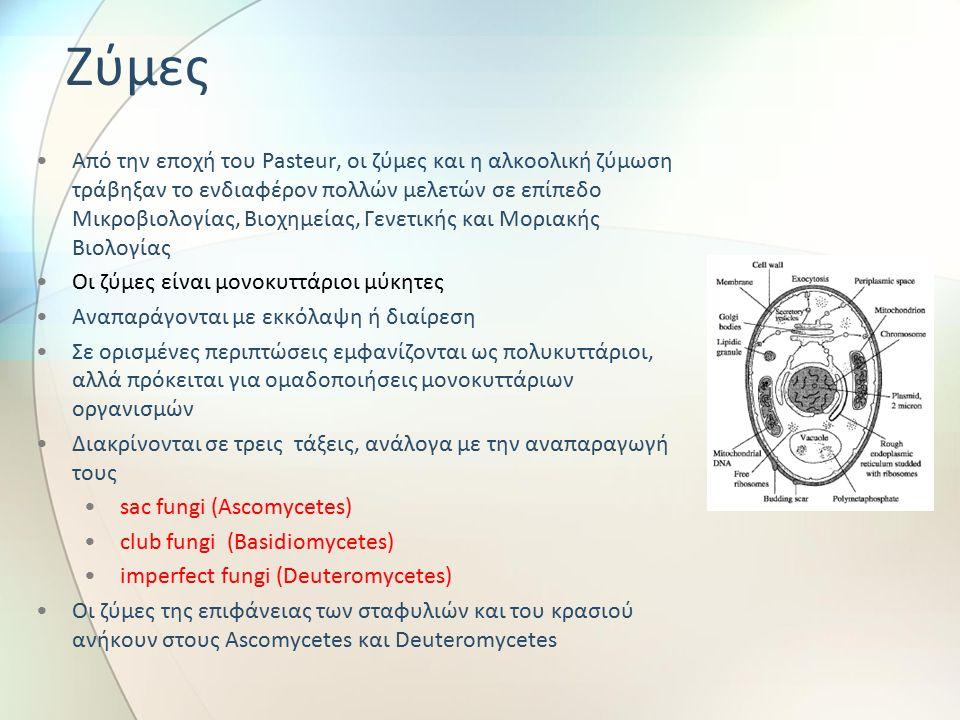 Ζύμες Από την εποχή του Pasteur, οι ζύμες και η αλκοολική ζύμωση τράβηξαν το ενδιαφέρον πολλών μελετών σε επίπεδο Μικροβιολογίας, Βιοχημείας, Γενετικής και Μοριακής Βιολογίας Οι ζύμες είναι μονοκυττάριοι μύκητες Αναπαράγονται με εκκόλαψη ή διαίρεση Σε ορισμένες περιπτώσεις εμφανίζονται ως πολυκυττάριοι, αλλά πρόκειται για ομαδοποιήσεις μονοκυττάριων οργανισμών Διακρίνονται σε τρεις τάξεις, ανάλογα με την αναπαραγωγή τους sac fungi (Ascomycetes) club fungi (Basidiomycetes) imperfect fungi (Deuteromycetes) Οι ζύμες της επιφάνειας των σταφυλιών και του κρασιού ανήκουν στους Ascomycetes και Deuteromycetes