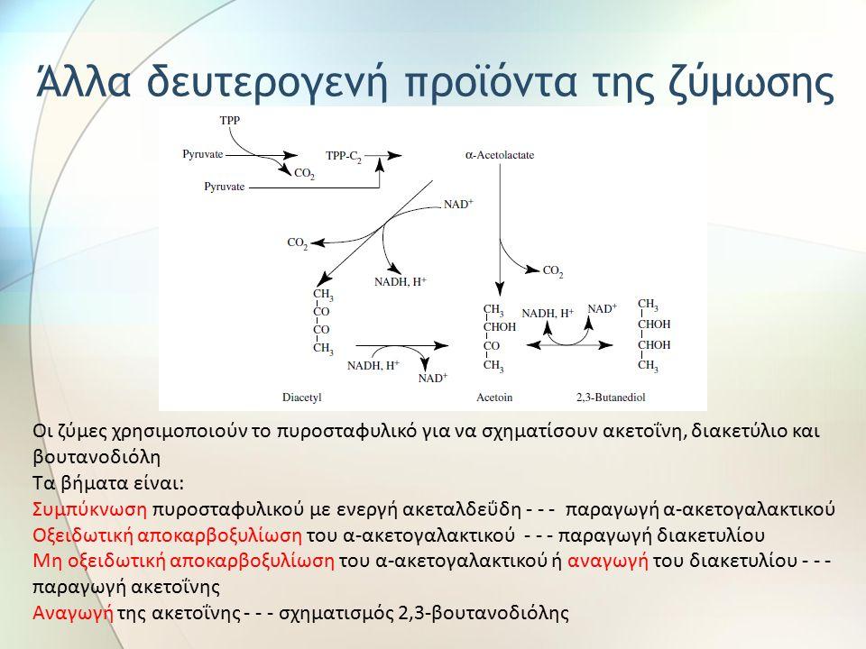 Οι ζύμες χρησιμοποιούν το πυροσταφυλικό για να σχηματίσουν ακετοΐνη, διακετύλιο και βουτανοδιόλη Τα βήματα είναι: Συμπύκνωση πυροσταφυλικού με ενεργή ακεταλδεΰδη - - - παραγωγή α-ακετογαλακτικού Οξειδωτική αποκαρβοξυλίωση του α-ακετογαλακτικού - - - παραγωγή διακετυλίου Μη οξειδωτική αποκαρβοξυλίωση του α-ακετογαλακτικού ή αναγωγή του διακετυλίου - - - παραγωγή ακετοΐνης Αναγωγή της ακετοΐνης - - - σχηματισμός 2,3-βουτανοδιόλης Άλλα δευτερογενή προϊόντα της ζύμωσης
