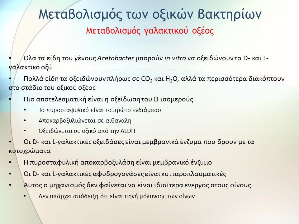 Όλα τα είδη του γένους Acetobacter μπορούν in vitro να οξειδώνουν τα D- και L- γαλακτικό οξύ Πολλά είδη τα οξειδώνουν πλήρως σε CO 2 και H 2 O, αλλά τα περισσότερα διακόπτουν στο στάδιο του οξικού οξέος Πιο αποτελεσματική είναι η οξείδωση του D ισομερούς Το πυροσταφυλικό είναι το πρώτο ενδιάμεσο Αποκαρβοξυλιώνεται σε αιθανάλη Οξειδώνεται σε οξικό από την ALDH Οι D- και L-γαλακτικές οξειδάσες είναι μεμβρανικά ένζυμα που δρουν με τα κυτοχρώματα Η πυροσταφυλική αποκαρβοξυλάση είναι μεμβρανικό ένζυμο Οι D- και L-γαλακτικές αφυδρογονάσες είναι κυτταροπλασματικές Αυτός ο μηχανισμός δεν φαίνεται να είναι ιδιαίτερα ενεργός στους οίνους Δεν υπάρχει απόδειξη ότι είναι πηγή μόλυνσης των οίνων Μεταβολισμός των οξικών βακτηρίων Μεταβολισμός γαλακτικού οξέος