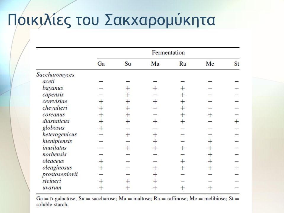 Ποικιλίες του Σακχαρομύκητα