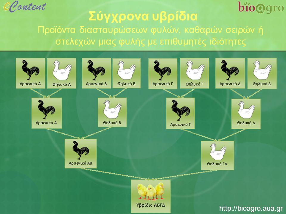 http://bioagro.aua.gr Σύγχρονα υβρίδια Προϊόντα διασταυρώσεων φυλών, καθαρών σειρών ή στελεχών μιας φυλής με επιθυμητές ιδιότητες