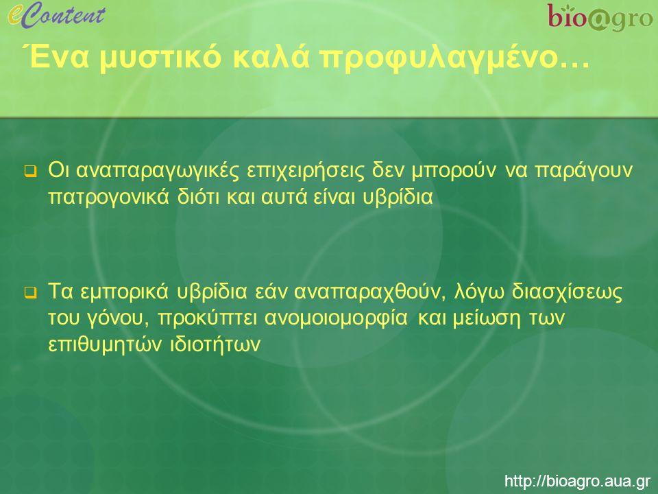 http://bioagro.aua.gr Ένα μυστικό καλά προφυλαγμένο…  Οι αναπαραγωγικές επιχειρήσεις δεν μπορούν να παράγουν πατρογονικά διότι και αυτά είναι υβρίδια  Τα εμπορικά υβρίδια εάν αναπαραχθούν, λόγω διασχίσεως του γόνου, προκύπτει ανομοιομορφία και μείωση των επιθυμητών ιδιοτήτων