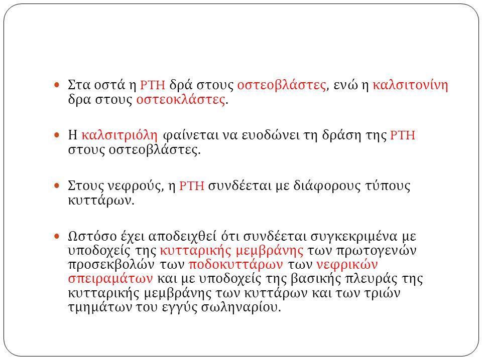 Στα οστά η PTH δρά στους οστεοβλάστες, ενώ η καλσιτονίνη δρα στους οστεοκλάστες.