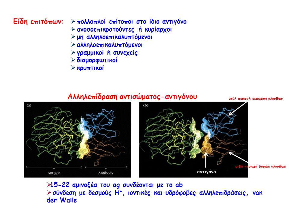 Είδη επιτόπων:  πολλαπλοί επίτοποι στο ίδιο αντιγόνο  ανοσοεπικρατούντες ή κυρίαρχοι  μη αλληλοεπικαλυπτόμενοι  αλληλοεπικαλυπτόμενοι  γραμμικοί ή συνεχείς  διαμορφωτικοί  κρυπτικοί  15-22 αμινοξέα του ag συνδέονται με το ab  σύνδεση με δεσμούς Η +, ιοντικές και υδρόφοβες αλληλεπιδράσεις, van der Walls Αλληλεπίδραση αντισώματος-αντιγόνου αντιγόνο μτβλ περιοχή ελαφριάς αλυσίδας μτβλ περιοχή βαριάς αλυσίδας