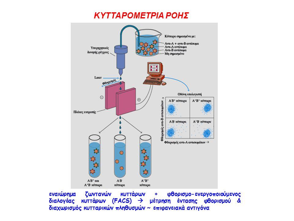ΚΥΤΤΑΡΟΜΕΤΡΙΑ ΡΟΗΣ εναιώρημα ζωντανών κυττάρων + φθορισμο-ενεργοποιούμενος διαλογέας κυττάρων (FACS)  μέτρηση έντασης φθορισμού & διαχωρισμός κυτταρικών πληθυσμών ~ επιφανειακά αντιγόνα