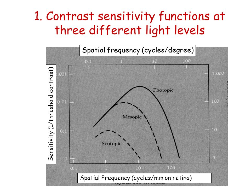 1. Contrast sensitivity functions at three different light levels Spatial Frequency (cycles/mm on retina) Spatial frequency (cycles/degree) Sensitivit